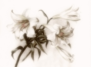 lillieswis15